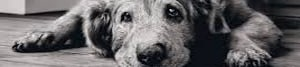 An old dog image for Magic Workshops for team building events and learn a trick page link